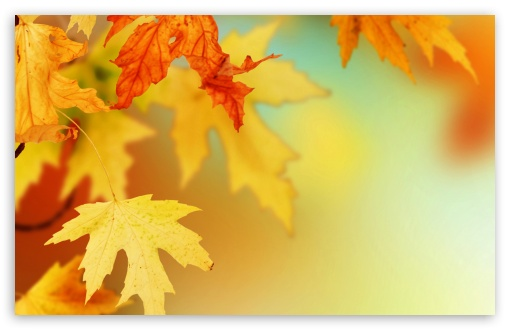 Yellow Autumn Leaves, Macro