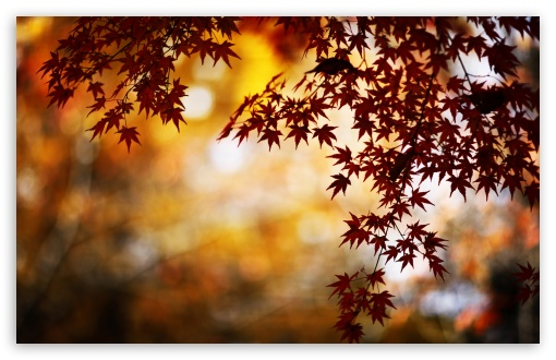 Red Foliage, Bokeh