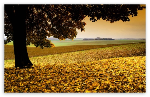 Field Covered In Yellow Leaves