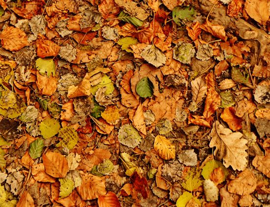 Colors. Fall texture
