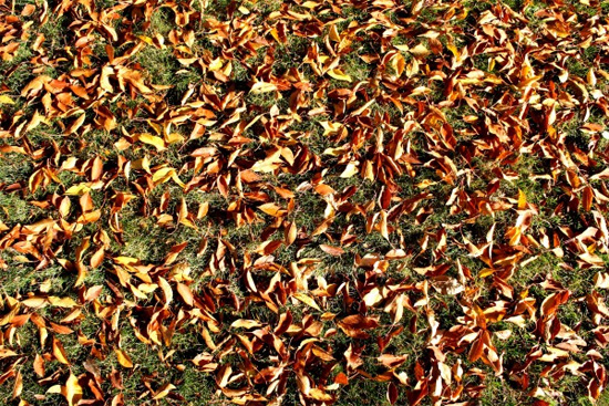 Fall Leaves on Grass Texture