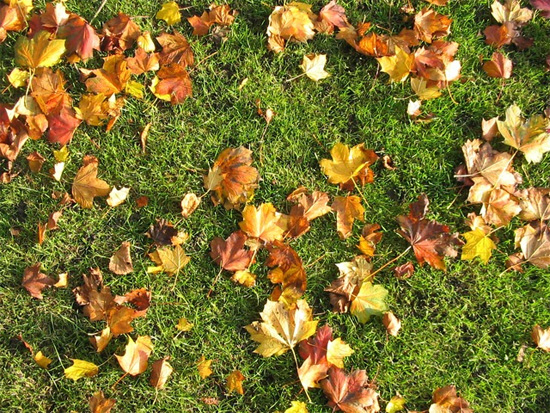 Brown Leaves Grass