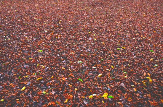 Carpet Leaves