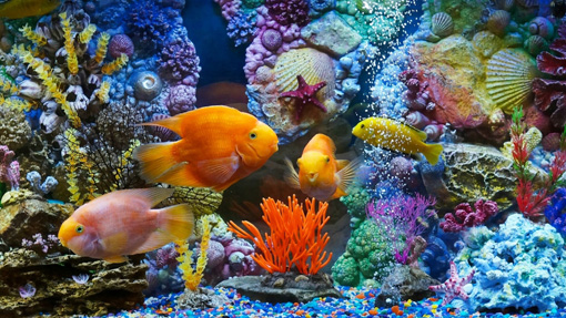 Aquarium Fish and Corals