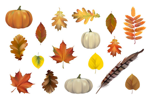 Collection of Autumn Vector