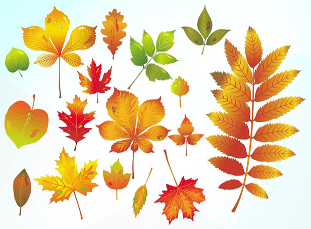 Different Autumn Vector Leaves