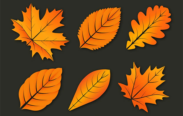Colorful Leaves Vectors