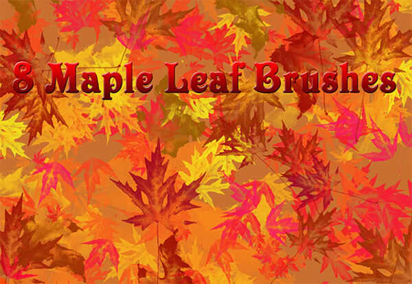 8 Large Maple Leaf Brushes