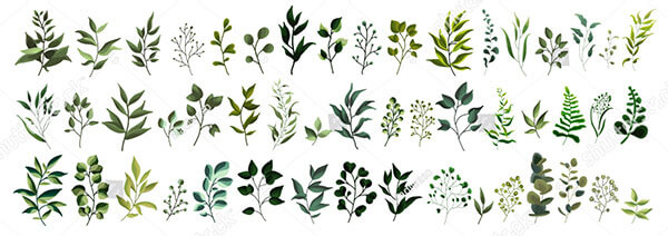 Collection of Plant Forest Herbs