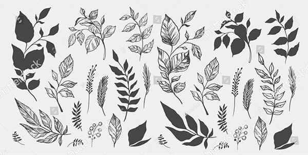 Set of Leaves Hand Drawn Decorative
